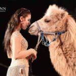 HamidCircus_Camel