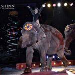 HamidCircus_Elephant1